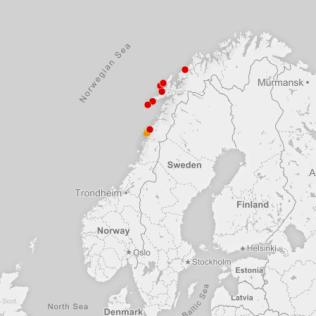 <p>Infeksiøs lakseanemi (ILA) er en alvorlig, smittsom virussykdom hos laks. ILA-viruset er også påvist hos oppdrettet regnbueørret og hos vill sjøørret. Funn av ILA-viruset er rapportpliktig både nasjonalt og internasjonalt.</p><p>ILA har i Norge festet og spredt seg i Nordland.</p><p>(Kilde: Veterinærinstituttet)</p>