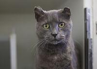 Katten Hemi funnet etter fem år på rømmen