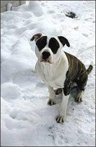 Dyrebeskyttelsen mener blandingshunder er fritt vilt.