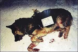 I retten i går ble den kvinnelige hundeeieren vist bildet av den døde blandingshunden med nummerlappen 25. I magesekken på denne hunden ble det funnet spor som beviser at den angrep syvåringen Johannes Åsheim 31. januar 2002.