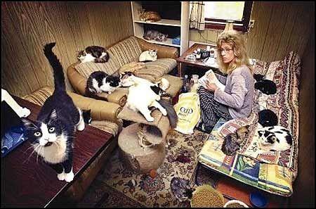 Moelvenbrakka på det nedlagte bilopphuggeriet er hjemmet til Lise Tove Røsand (44) og hennes nærmere 70 katter.