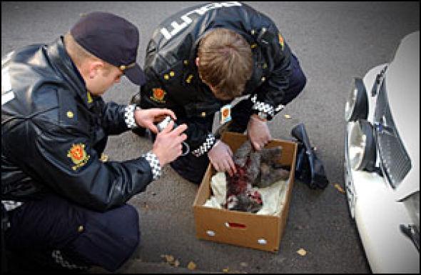 Hundedrapet skjedde ved 15-tiden i Neuberggata på Oslos beste vestkant. Politiet fikk melding om episoden like over klokken 15, og var raskt på stedet.