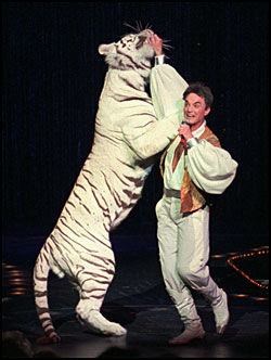 FORTID: Roy Horn (bildet, arkivfoto) fra lykkerligere dager. Tigeren på bildet er ikke Montecore. Foto: AP