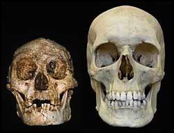 LITE HODE: Hodeskalle fra homo floresiensis ved siden av en hodeskalle fra homo sapiens. Foto: AFP