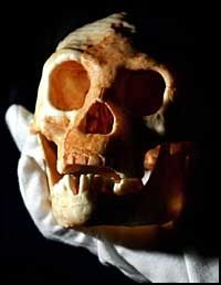 LEGENDER: Dagen befolkning på Flores forteller legender om mini-mennesker. Her er en modell av en av hodeskallene som ble funnet. Foto: Reuters