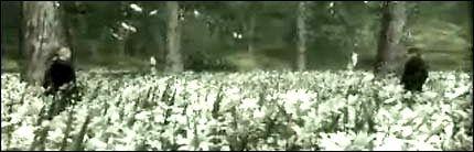 Bildet er fra Tokyo Game Show 2004-traileren av spillet. Foto: Konami