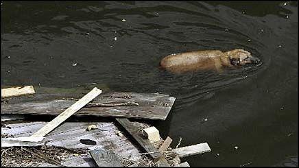 SKAPER ANGST: Skjebnen til forlatte kjæledyr skaper angst blant de evakuerte etter Katrina. Foto: AP