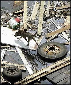 FLERE TUSEN: Redningsmannskaper forteller om flere tusen kjæledyr som er forlatt av eierne. Foto: AP