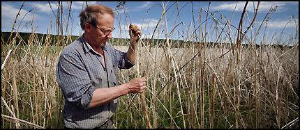 I HAMPEN: Her er den svenske bonden Birger Carlquist i åkeren som kunne ha sendt ham i fengsel dersom den lå i Norge. Foto: Thor Nielsen