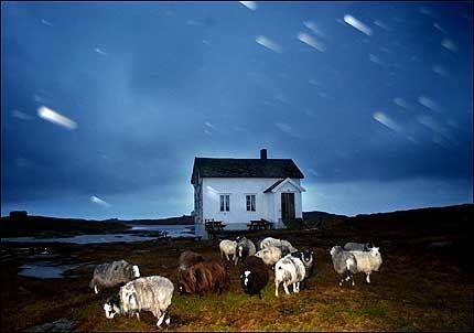 UBERØRT: Hysvær utenfor Vega er et godt eksempel på ganske uberørt norsk natur. Foto: RUNE STOLTZ BERTHINUSSEN