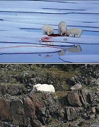 Se skrekkbildene fra is-områdene