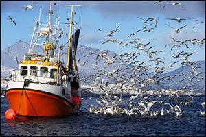 UNDERHOLDENDE: Turismen genererer nå mer penger enn fiskeriene i Lofoten. Som turist kan du trekke din egen skreifangst, som hotellkokken tilbereder til middag. Foto: Bjørn Erik Rygg Lunde