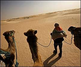 ØRKENSKIP: Kamelene har gjort samme nytte i ørkenen, som skipene på havet. Før var de uunnværlige for varetransporten. Nå er de viktige for turismen. Foto: Terje Bringedal