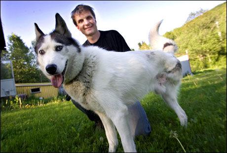 LEVER LIKE BRA: Eier Lasse Gjerde mener sledehunden Tim nyter livet like godt på tre ben. Foto: Espen Braata