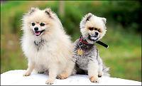Blind hund med førerhund!