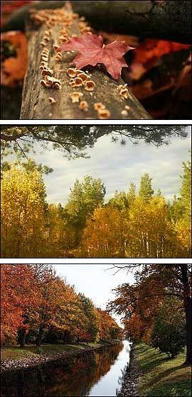 VAKKER ÅRSTID: Leserne har sendt inn en rekke flotte høstbilder. Foto: VG Netts leserne Vegard S, Rolf og Øyvind Nicolaisen