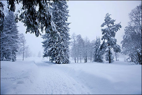FEBRUAR-KALDT: Februar måned 2009 var kaldere enn normalt og meteorologene må helt tilbake til mars 2006 for å finne en måned det var kaldere enn det pleier å være. Bildet er fra Songsvann i Oslo 22. februar. Foto: Scanpix