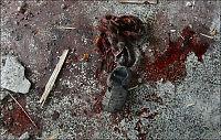 - Rabbinere manet til religiøs krig på Gazastripen