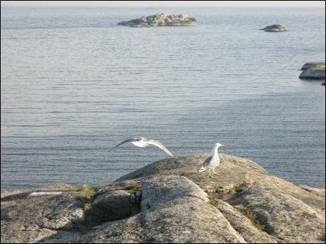 VÅRVÆR I VENTE: Slik så det ut på Verdens Ende i Tjøme i 2007. Nå komme rvårvær og fine solskinnsdager. Foto: Scanpix