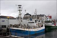 Hvalfangstskute forsøkt senket i Henningsvær