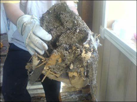 REIR: Dette var bare ett av de ni reirene som ble funnet i huset. Foto: Privat
