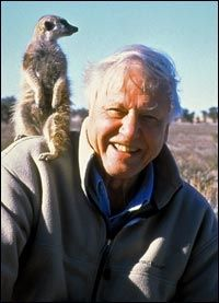 SKAL LEDE PRESENTASJONEN: BBC-journalisten David Attenborough. Foto: Reuters/Scanpix