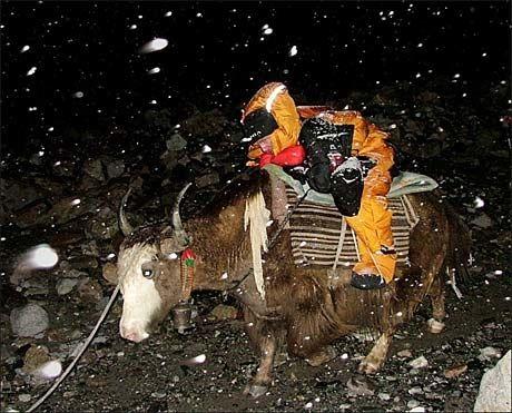 STRABASIØS FERD: Jarle Trå (39) måtte fraktes ned fra Mount Everest på ryggen av en jakokse. Foto: