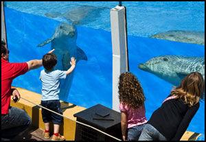 NÆRKONTAKT: Bare en glassvegg skiller deg fra delfinene i Selwo Marina, en hyggelig, liten dyrepark med vekt på dyr fra eksotiske strøk. Foto: Geir Olsen