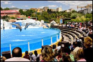 (DEL)FIN-FIN UNDERHOLDNING: Selwo Marina byr på et forrykende og morsomt delfinshow. Foto: Geir Olsen