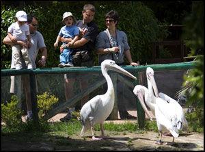 TITT-TEI: De nysgjerrige pelikanene i Selwo Marina kommer gjerne helt bort til deg. Foto: Geir Olsen