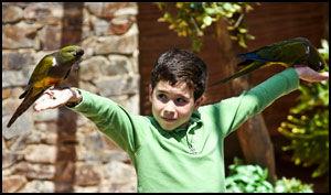 EN FUGL I HÅNDEN . . . : I Selwo Marina kan du fort ende opp med to. Barna får nemlig lov til å delta i fugleshowene. Foto: Geir Olsen