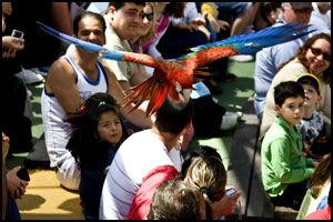 FARGERIKT: Fugleshowene i Selwo Marina byr på både farger, fart og sjansen for å få en papegøye i håret. Foto: Geir Olsen