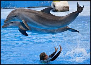 STRØMLINJEFORMET: Ikke noe å si på presisjonsnivået til delfinene i Selwo Marina. Foto: Geir Olsen
