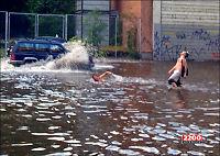 Ellevill svømmetur i Oslos gater