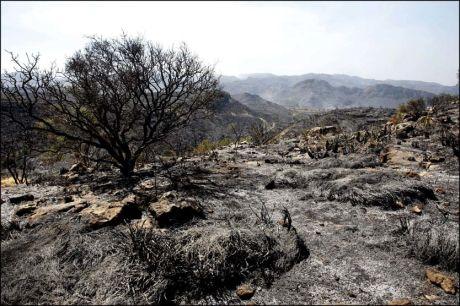 SVIDD: Store områder er utbrent i skogene i Almeria-provinsen i Spania. Foto: EPA