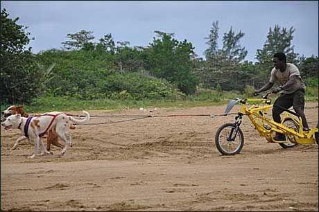 TRENER HJEMME: Slik trener Newton Marshall hjemme på Jamaica. Han jobber i et selskap som tilbyr turister turer med dette redskapet. Foto: Jamaica Dogsled Team