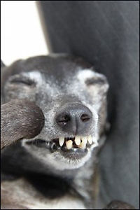 Hunden Mads (9) elsker å synge!