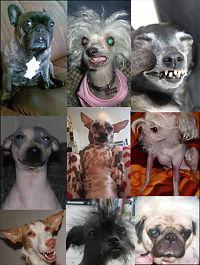 Dette er juryen som skal kåre Norges styggeste hund