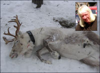 «Vazelina-Rudolf» likvidert