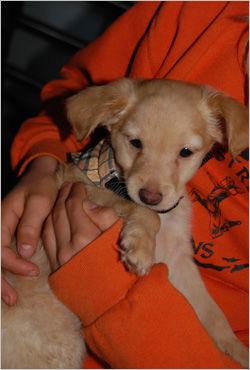 FRA SPANIA: Castello Constantin ble adoptert fra Spania sommeren 2008. Her er han hans nye familie hentet ham på Gardermoen. Foto: Sunniva Tungen