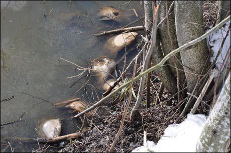 - LUKTER VONDT: Flere døde fisk ligger i dette vannet og lukter ifølge Gøran Stensrud vondt. Foto: Gøran Stensrud