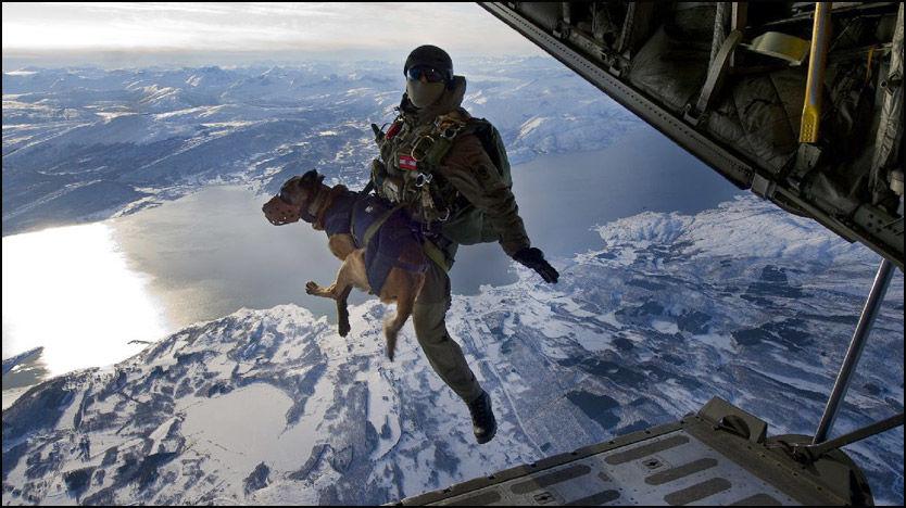 GERONIMO! Hunden Duke og de østerrikske spesialsoldatene hoppet fallskjerm over Narvik tidligere i vinter. Foto: Det østerrikske forsvaret