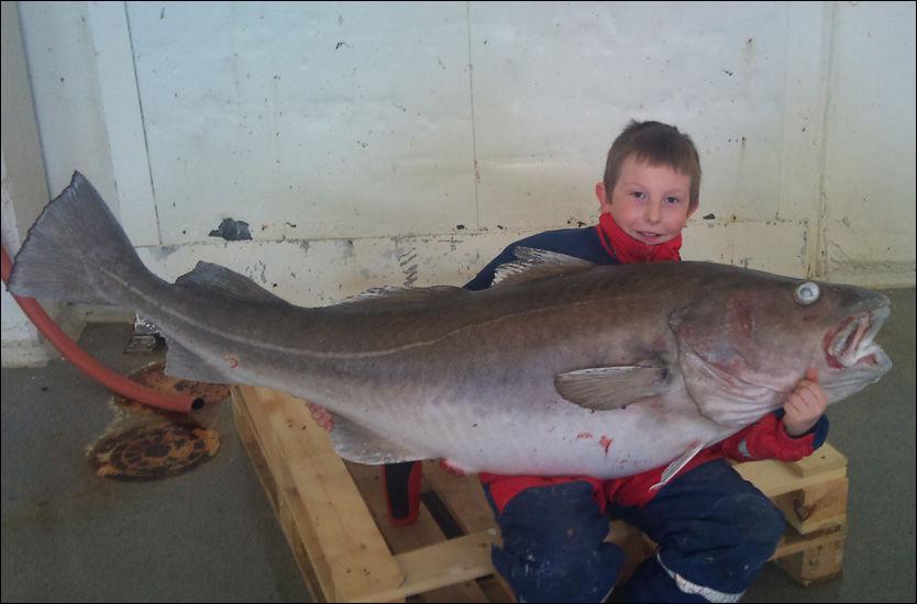 SJEKK DEN RUGGEN! Hans Kristian Hansen (10) med den enorme fangsten - som holder til ny norgesreord for torsk med halvannen kilos margin. Bildet er tatt i dag, etter at fisken har overnattet i frysen. Foto: Privat