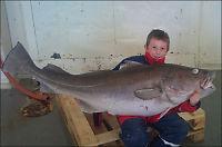 Hans Kristian (35 kilo) tok torsk på 39 kilo
