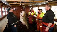 Sjekk kjempetorsken på 41 kilo