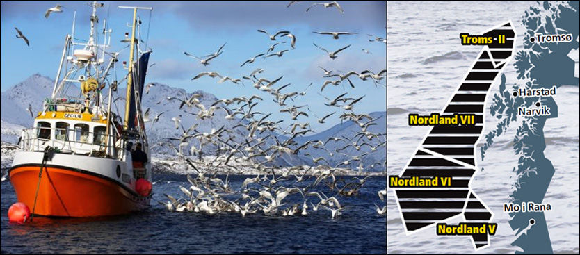 INGEN KRISE? En ny rapport hevder at fisken i Lofoten ikke er i fare ved et eventuelt oljeutslipp. Foto: BJØRN ERIK RYGG LUNDE