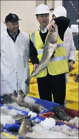 FISKER STEMMER: David Cameron driver en innbitt kamp om å fiske stemmer den siste dagen før valget. Her er torylederen på besøk på et fiskemarked. Foto: AFP