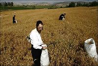 Italienske kjeder vil boikotte israelske varer