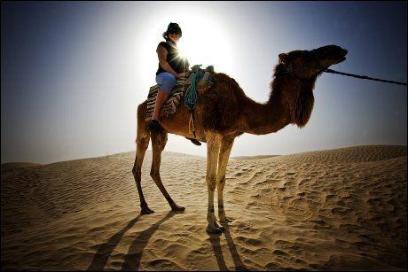 ANNERLEDES: I Tunisia kan du legge inn en dags kameltur på strandferien. Foto: TERJE BRINGEDAL