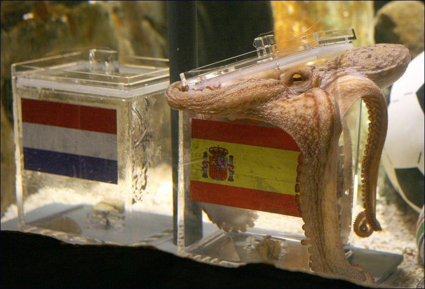 FIKK RETT: Her spår blekkspruten Paul at Spania vinner VM. Foto: AFP
